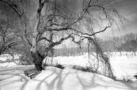 Holmdel Park after the Blizzard